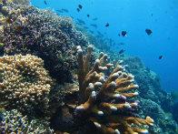 CHACHA_SEA1