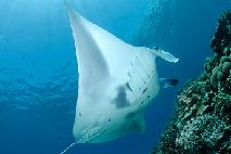 new_derawan-diving03