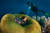 new_underwater5