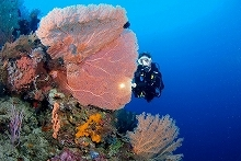 diving_halmahera_weda18