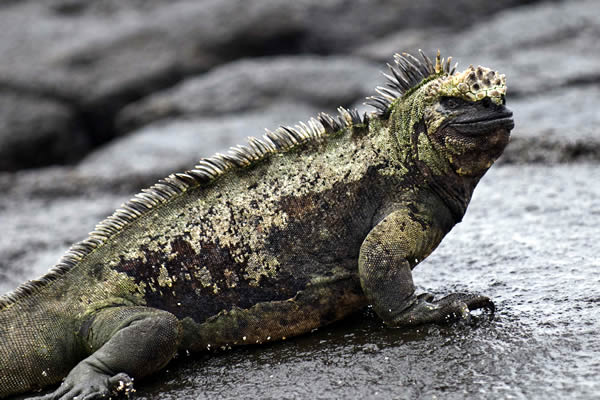 ガラパゴス諸島