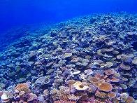 キミシマ環礁