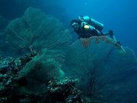 kermi-coral