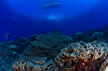 kosrae_coral1