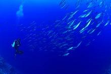 kosrae_diving3