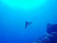 kosrae_diving4