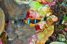 kosrae_diving6